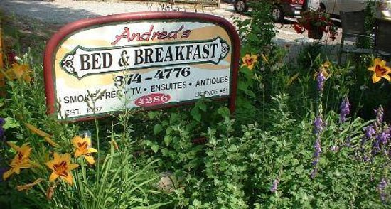 Andrea's Bed and Breakfast : I look forward to meeting you