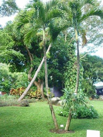 Deshaies picture of jardin botanique de deshaies for Jardin botanique guadeloupe