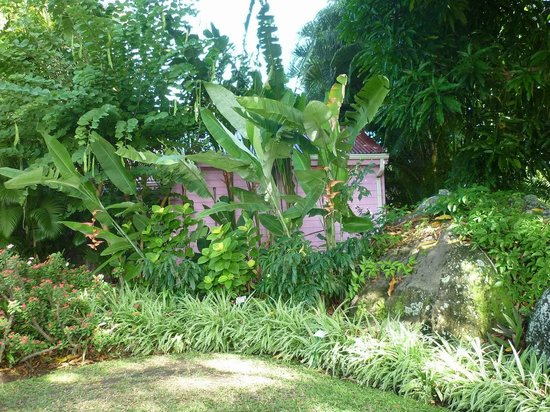 Deshaies picture of jardin botanique de deshaies for Jardin botanique deshaies