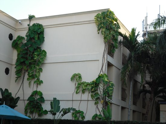 The Knutsford Court Hotel: Plants and Trees Growing on Building