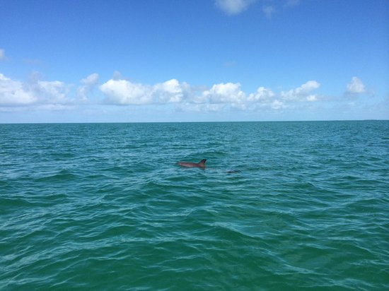 Take Me There Charters: Dolphins!