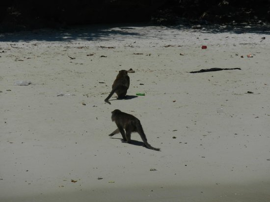 Phi Phi Islands: Monkey Beach