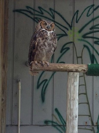 McCarthy's Wildlife Sanctuary : Owl