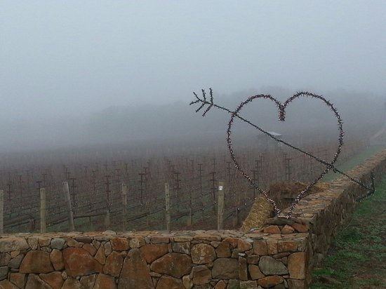 PF Wine Tours: Valentine's week on a Napa morning