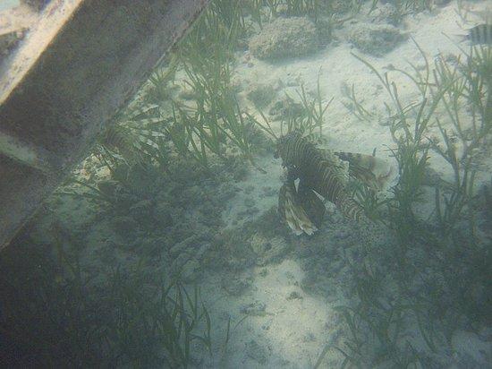 Fun Island Resort: leon fish sotto il pontile