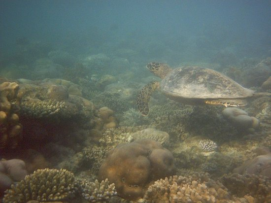 Fun Island Resort: tartaruga