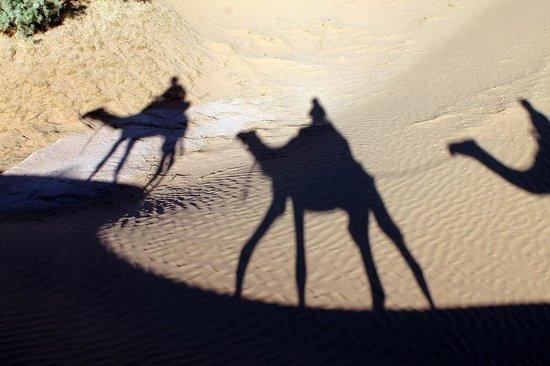 Dar Sidi Bounou : Camel shadows