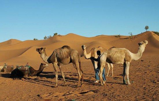 Dar Sidi Bounou : Camel excursion