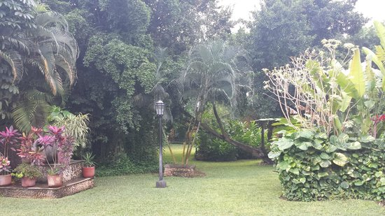 Hacienda Misne : The garden on a misty morning.