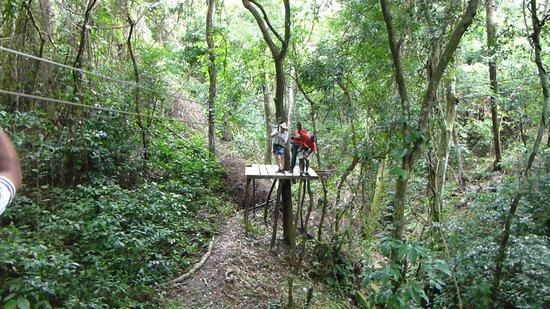 Jungle Top Zipline Adventure: Zip lining with Jungle Top Adventures