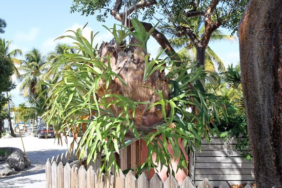 Dream Bay Resort: Enormous staghorn fern