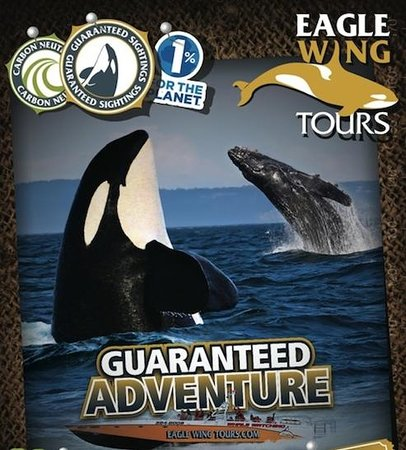 Eagle Wing Whale Watching Tours: Eagle Wing has been rated #1 since 2007 :)