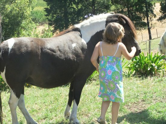 Hatcher's Manor: my autisic granddaughter loved patting the horses