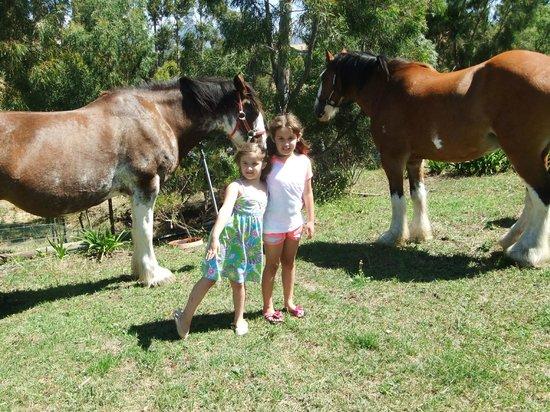 Hatcher's Manor: horses very quiet around the girls