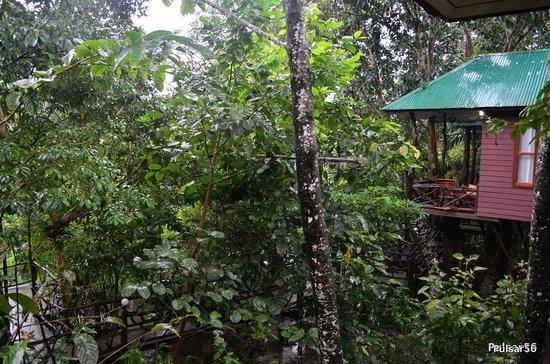 Khao Sok Paradise Resort: Standard Tree House