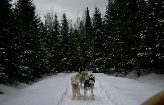 Aventure Plein Air Inukshuk: Dog sledding