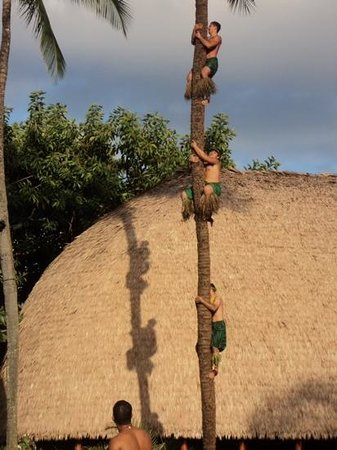 Polynesian Cultural Center: amazing tree climbers