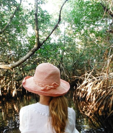 Tour The Glades - Private Wildlife Tours : This Could Be You...