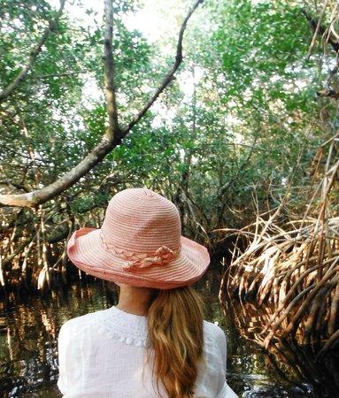 Tour the Glades - Wildlife Tours