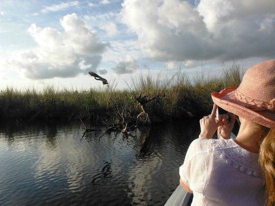 Tour The Glades - Private Wildlife Tours: Tri Color Heron Across the Grass Praire