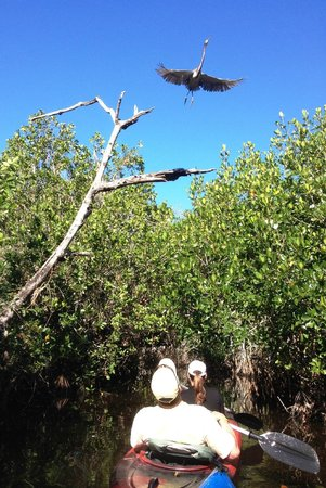 Tour The Glades - Private Wildlife Tours: Don't forget to look up!