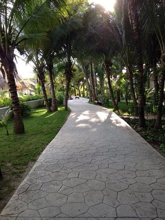 El Dorado Sensimar Riviera Maya: Walkway through a garden