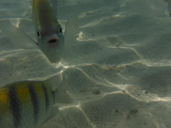 Sensimar Seaside Suites & Spa: very tame fish in the clear beach water