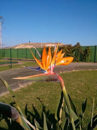 Camping Naturista Almanat: Sport facilities