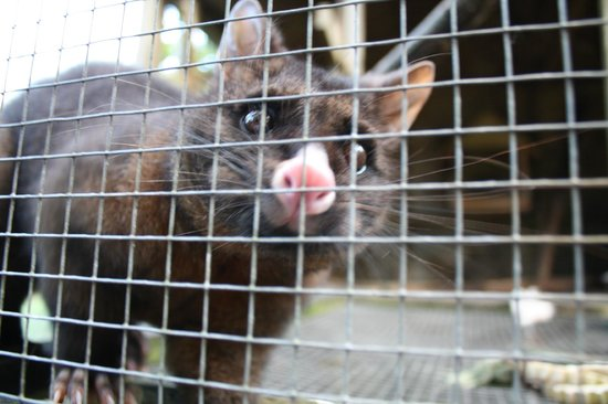 Mill Creek Bird & Animal Encounters: Monkey the Possum