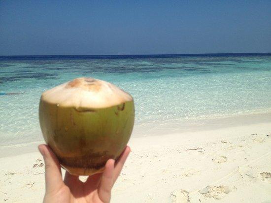 Bandos Maldives : noix de coco