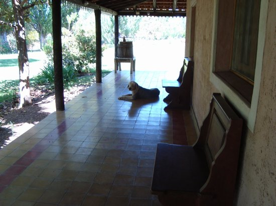 Posada Cavieres Wine Farm: Tommy relaxing on the verandah
