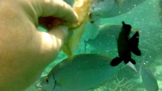 Diamonds Thudufushi : un aquarium naturel