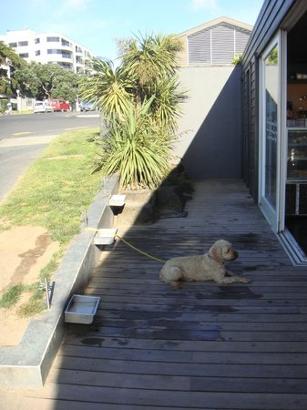 Takapuna Beach Cafe : Even catering for the four legged kind