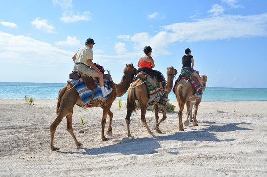 Maroma Adventures : the guilds will lead the camels, you just sit on the camel back, comfortable