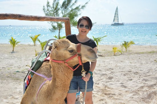 Maroma Adventures : they will stop a while for rest, so that you can have closer contact with the camels