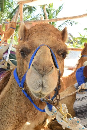 Maroma Adventures : Abibi, from Australia