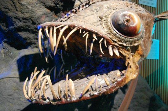 Oceanografic: Der beißt keinen mehr:  Antikes Ungeheuer im Trockendock