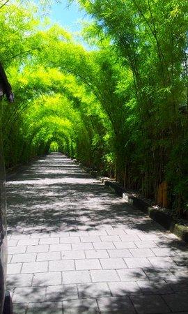W Bali - Seminyak : the bamboo entrance