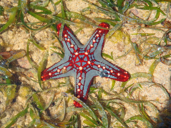 Forest Dream Resort: Sea star at Diani beach
