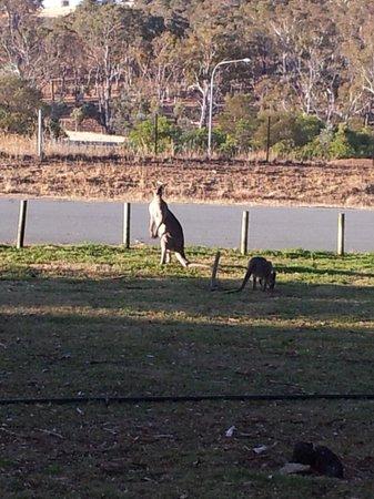 Ibis Styles Canberra Eaglehawk : Wildlife