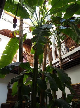 Riad Mehdia : patio del riad