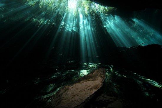 Pro Dive International: Garden of Eden