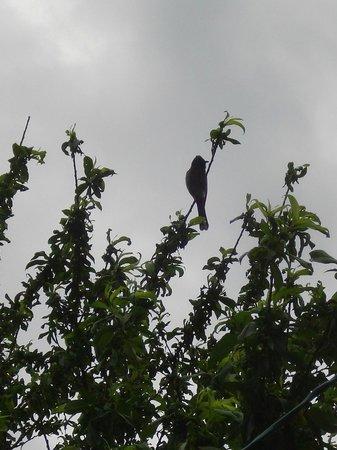 Bird Watching @ Jamwal Villa Homestay
