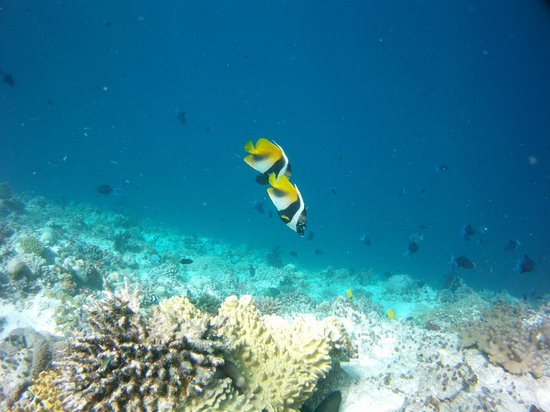 Ellaidhoo Maldives by Cinnamon: house reef