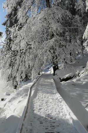 Berghotel Mummelsee: Sehr schön neu angelegter Laufsteg um den See