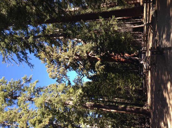 Mariposa Grove of Giant Sequoias: Grizzli giant