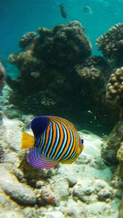 Ellaidhoo Maldives by Cinnamon : house reef