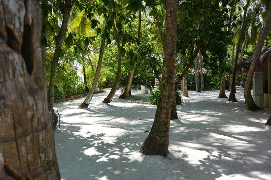 Ellaidhoo Maldives by Cinnamon: island
