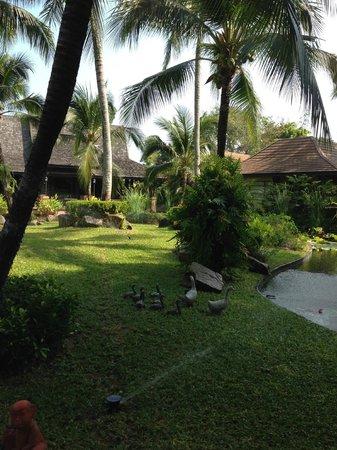 Bo Phut Resort & Spa : Garden