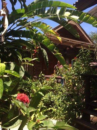 Banana Garden Home : Notre bungalow